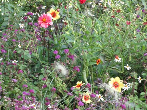 Flowers in Museumplein Park