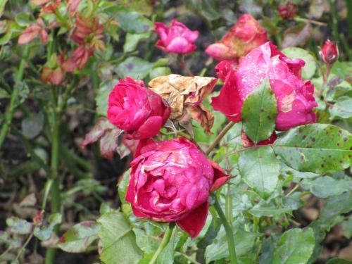 Flower gardens in Vondelpark